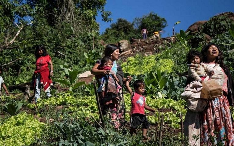 MISIONES: EL VOTO INDÍGENA NO SE VENDE Y CASTIGÓ A DIPUTADO DE ROVIRA ¡INSÓLITO! Diputado Oficialista electo maltrató a indígenas Mbya Guaraní porque no lo votaron