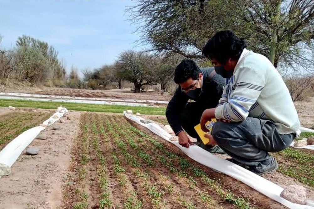 Se impulsará la agricultura familiar y generación de empleo a través el programa PROTAAL
