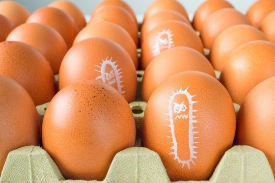 Advierten sobre el cuidado para prevenir la infección por salmonella