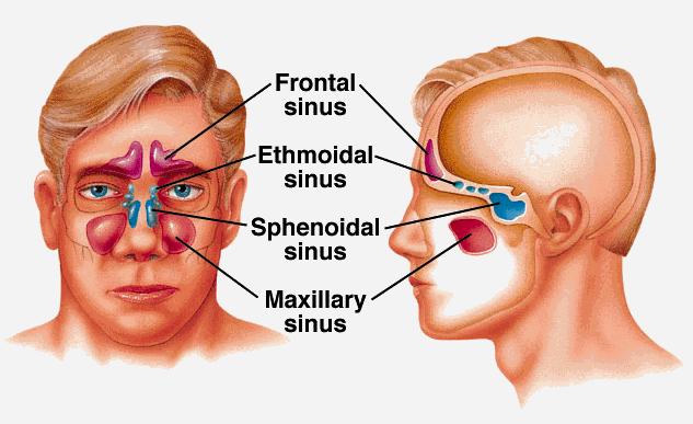 Sinus Pressure Diagram - Wiring Diagram Sys