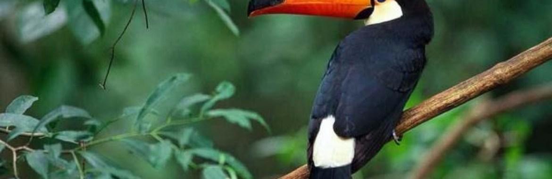 Avistaje de aves, una opción para los turistas en Salta