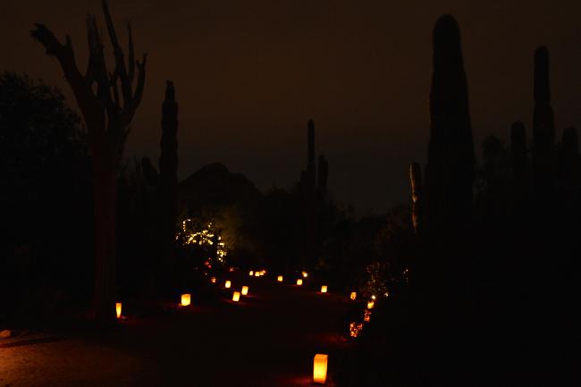 Luminarias, Desert Botanical Garden