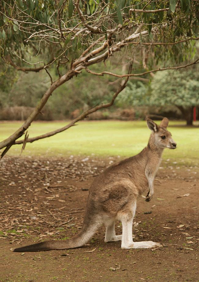 Tasmanian Devil Unzoo | Tasman Peninsula, Southern Tasmania | Saltbush Avenue