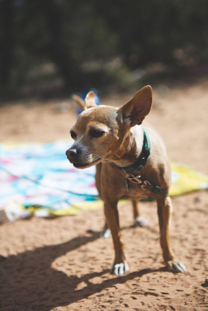 Dogs make the camping experience that much more special.