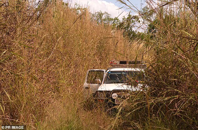 Gamba grass burns 10 times hotter than native grass species and can grow up to six metres tall, creating uncontrollable fires if it catches alight