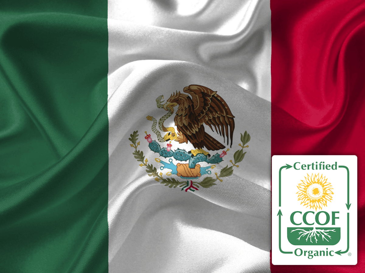 Mexican Chiapas Certified Organic Subscription