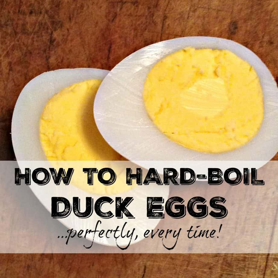 Perfect Hard-Boiled Duck Eggs