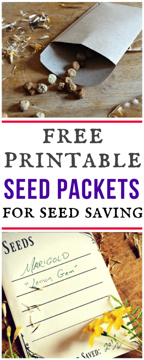 free printable seed packet for seed saving