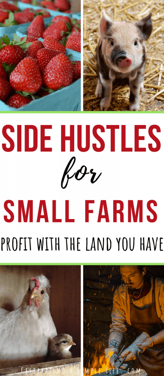 making money on a small farm