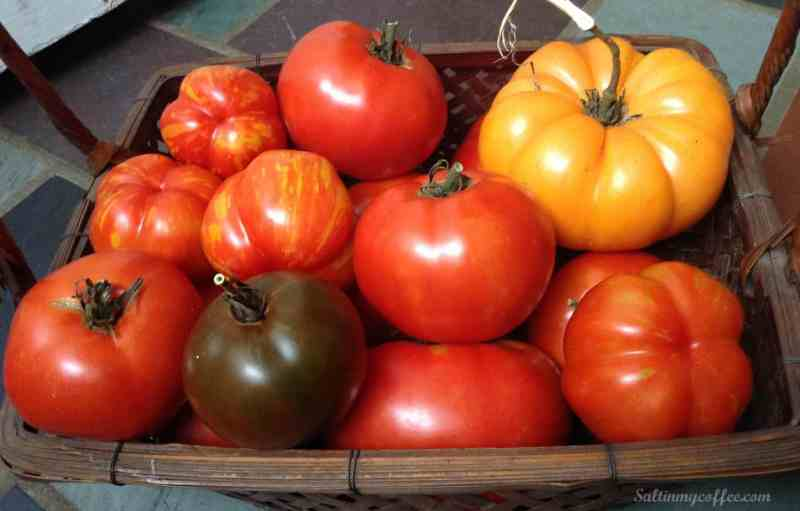 best-tasting heirloom tomatoes