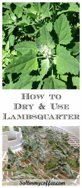How to dehydrate lambsquarter