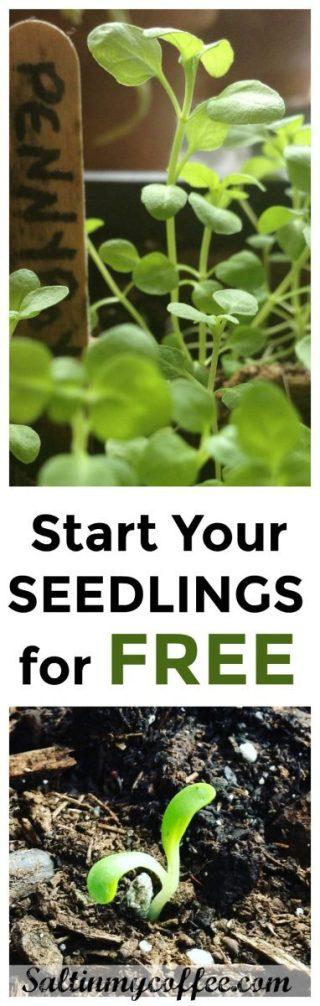 how to start seedlings for free