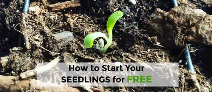 how to start your seedlings free