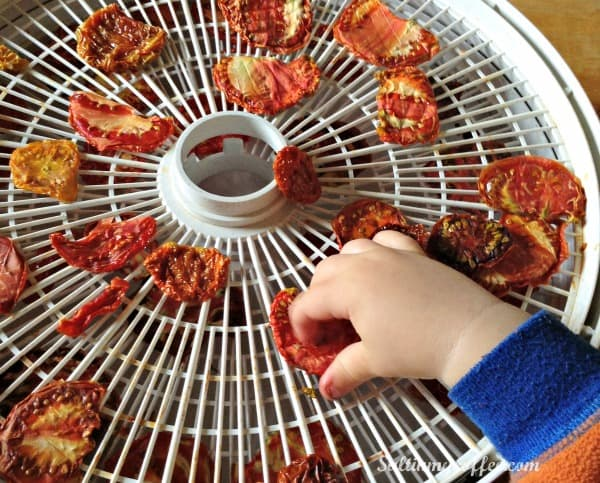 how to make sund-dried tomatoes in a dehydrator with kids