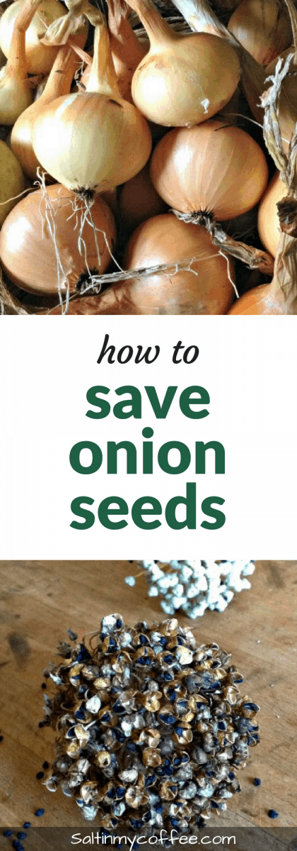 how to save onion seeds