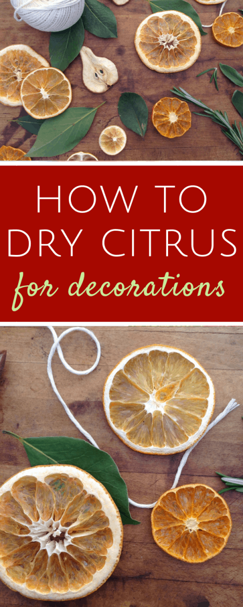 How to dry perfect citrus slices for holiday decorations...it's super easy to make traditional dried orange slices for ornaments and garlands. #Christmascrafts #driedoranges #farmhouseChristmas #traditionalChristmas #DIYChristmasdecorations #handmadeChristmas