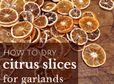 how to dry citrus slices