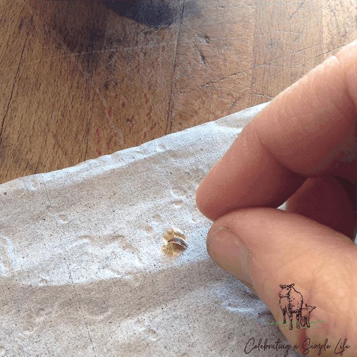 homemade seed tape