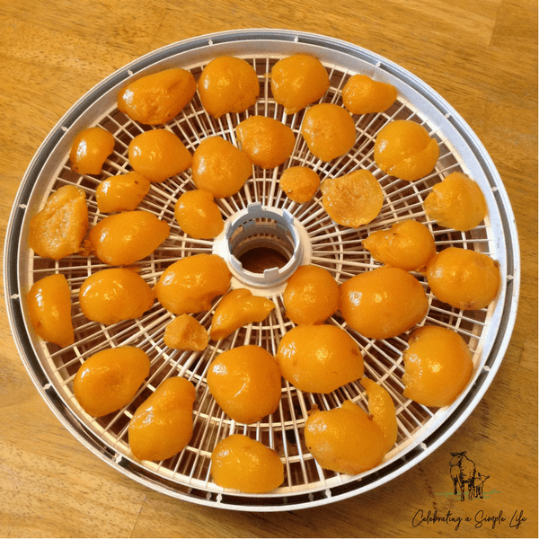 dehydrating canned peaches