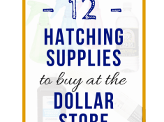 hatching supplies to buy at the dollar store