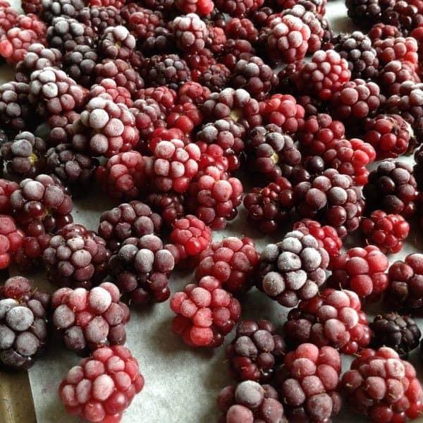 how to freeze blackberries yourself