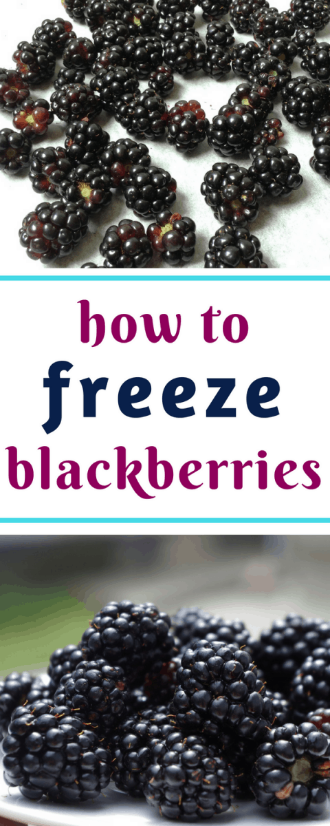 Good easy method for how to freeze blackberries, so they don't end up as a big solid block!