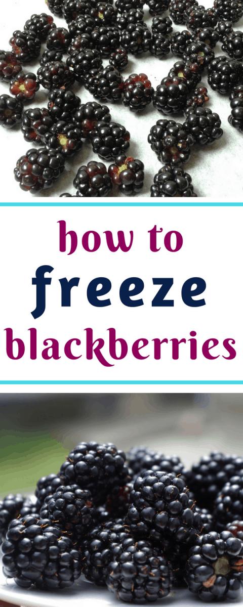 How to freeze blackberries