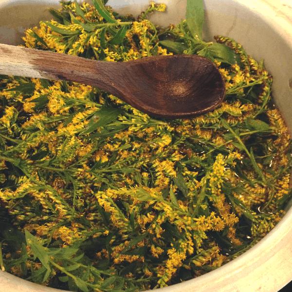 creating a goldenrod dye bath