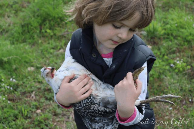 little girl holding a sleeping chicken