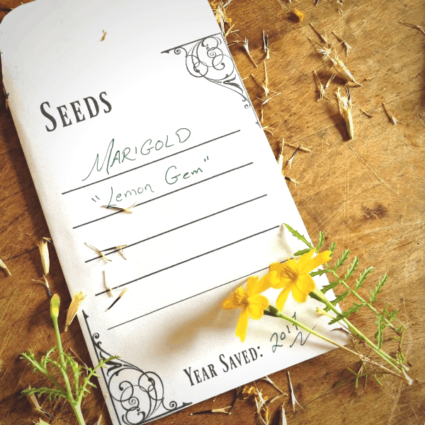 Downloadable seed packet for printing