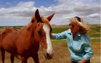 Posh Teepees and Horse-Whispering Cowgirls