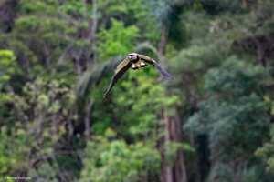 rodrigo-aves-3-300x200 As aves em suas cores e tamanhos diversos iluminando a natureza em Salto do Jacuí. Vamos preservar nossas riquezas. Fotos: Rodrigo Rodrigues