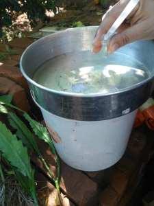 v-ambiental-3-225x300 Salto do Jacuí tem casos suspeitos de dengue