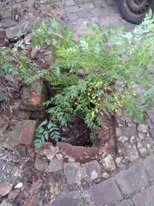 Bueiro-2-225x300 Grades de ferro são furtadas de bueiros