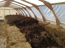 Making a manure hotbed as a germination table/heater