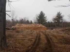 Processed firewood