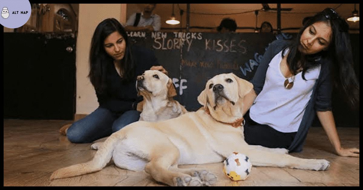 Pet-freindly cafes in Delhi-NCR