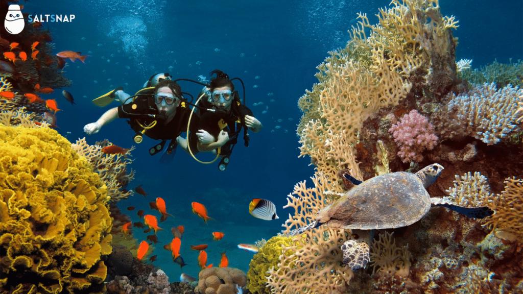 north goa scuba diving