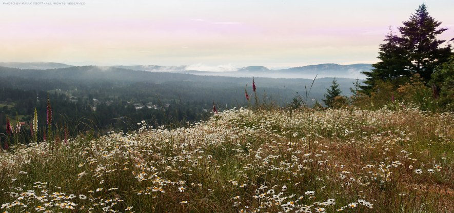 wild flower meadow on Salt Spring Island
