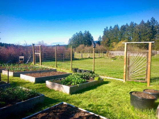 raised bed on Salt Spring Island