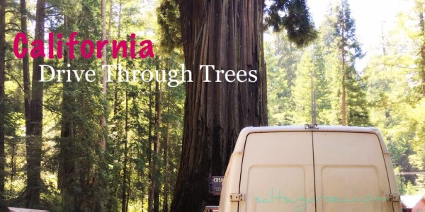 California Drive through redwood trees