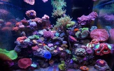 thriving-reef-aquarium