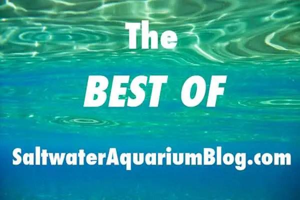 best of saltwater aquarium blog