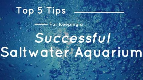 Top 5 tips for keeping a successful saltwater aquarium