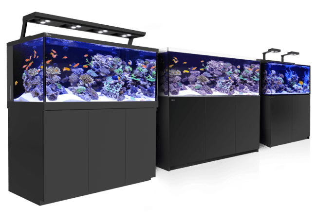 Aquarium Kits at Aquatic Treasures of Southern, Nevada
