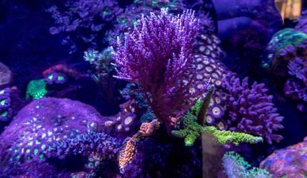 Assorted Saltwater Coral - Aquatic Treasures of Las Vegas, Nevada