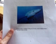 The Conservation Status of the Blue Shark