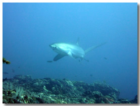 Shark encounters section philippines