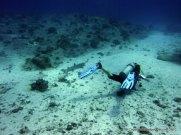 Creeping up on a Whitetip Reef Shark, Palau