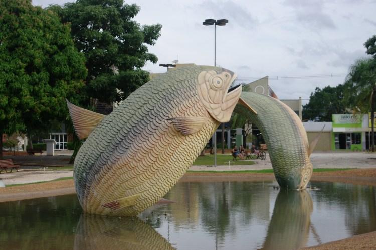 fish Bonito